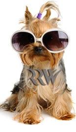 DogGroomingAffKit_rr