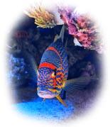 TropicalFishCare_rr