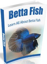 BettaFish_mrr