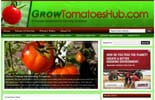 GrowingTomatoesBlog_p
