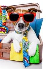 Summer Holiday Dog