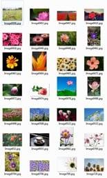 PlantsStockImages_rr